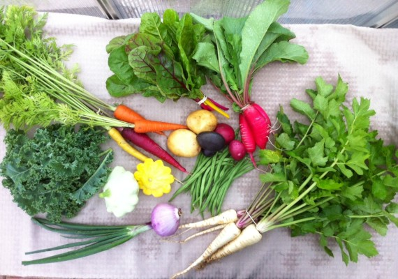 4th Week Summer CSA