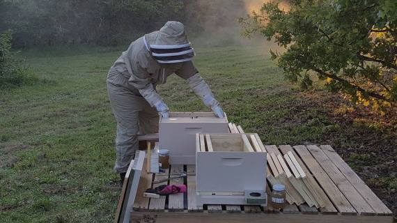 Hiving the bees